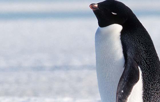 Administrador de Redes Linux Pleno